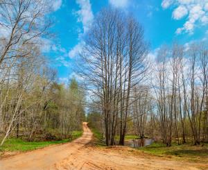 Весенний чудесный день в лесах Валдайской возвышенности рядом с озером Михайловское (система озер р.Березайка)